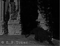 How the beast might look if seen in Chapel Hill graveyard at night, photo � E.P.Tozer